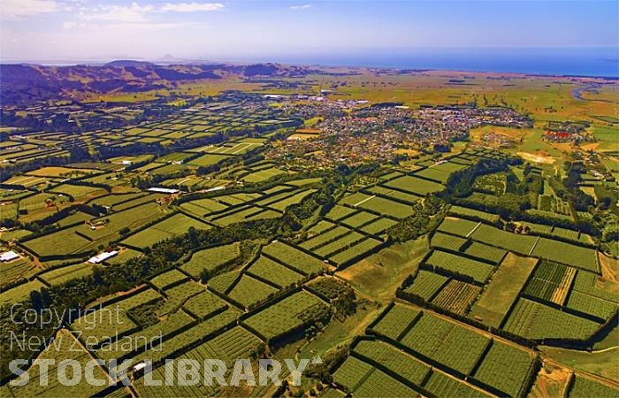 Aerial;Te Puke;Bay of plenty;kiwi fruit orchards;kiwi fruit;kiwi fruit growing;agriculture;agricultural centre;arable farmingMarae;Te Puke-Kiwifruit Capital