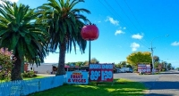 Levin;Kapiti_Coast;War_Memorial;horticulture;agriculture;market_gardens;Tararua_
