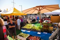 Matakana;Rodney;Viveyards;market;farmers_market;public_toilets;Seedling;Sellers