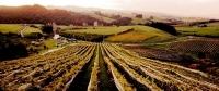 Matakana;Rodney;Vineyards;market;farmers_market;public_toilets;Autumn_Colours;fa
