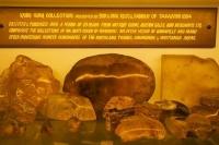Matakohe;Rodney;Kaipara_Harbour;Kaipara;Kauri_Museum;Museum_Kauri;Gum;Kauri_Gum;