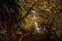 Dawson_Falls;Taranaki;Mount_Taranaki;Mount_Egmont;River;Rivers;bush;native_forre