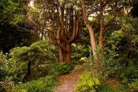 Hallard_Gardens;Taranaki;Mount_Taranaki;Mount_Egmont;landscape;Hallard;Gardens;S