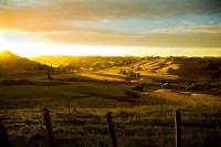 Wairarapa_Landscape_Image;Wairarapa;golden_light;Dawn;sheep_country;sunrise;long