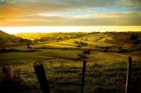 Wairarapa_Landscape_Image;Wairarapa;sunrise;sheep_country;long_shadows;Dawn;gold