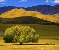 Waitaki_Valley;South_Canterbury;Canterbury;Willow_Landscape;Waitaki_Valley