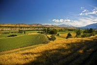 Awatere_Valley;Marlborough;bush;native_forrest;irrigation;green_fields;green_pad
