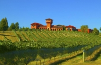 Vineyards;Marleborough;Wairau_Plains;vines;vintners;grapes;Highfield_Estate