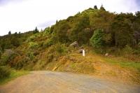 Maungatapu_Track;bush;native_forrest;forestry;Maitai_Saddle;Maitai_Saddle_route;