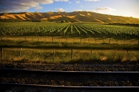 Wairau_Plains_and_Coast;Marlborough;vineyards;braided_rivers;Wither_Hills;Rail_T