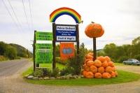 Millers_Flat;Otago;Clutha_River;Pumkins;Millers_Flat;Peirce_Orchard;the_pumpkin_