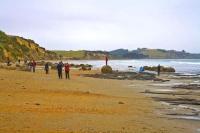 Moeraki;Otago;Yellow_Eyed_Penguins;Moeraki_Boulders;tourists