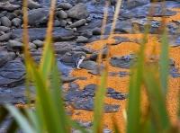 Moeraki;Otago;Yellow_Eyed_Penguins;Moeraki_Boulders