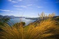 Otago_Peninsula;Otago;harbour;golden_sands;MacAndrew_Bay