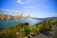 Otago_Peninsula;Otago;harbour;golden_sands;MacAndrew_Bay;Toi_Toi_Grass