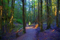 Harwoods_Hole;Tasman_Bay;native_forrest;forest_track;tramping_track;trampers;lic